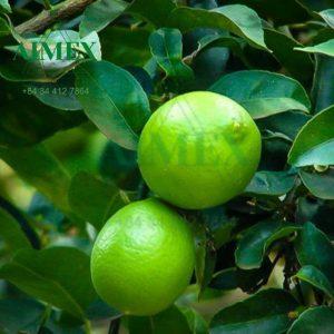 seedless-lime-1